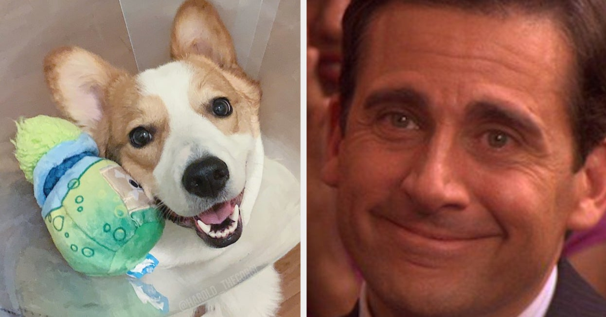These 19 Dog Pics Will Undoubtedly Make Your Day Better