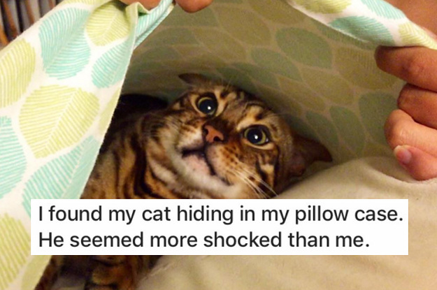 15 Cats Who Lost The Ultimate Game Of Hide-And-Seek