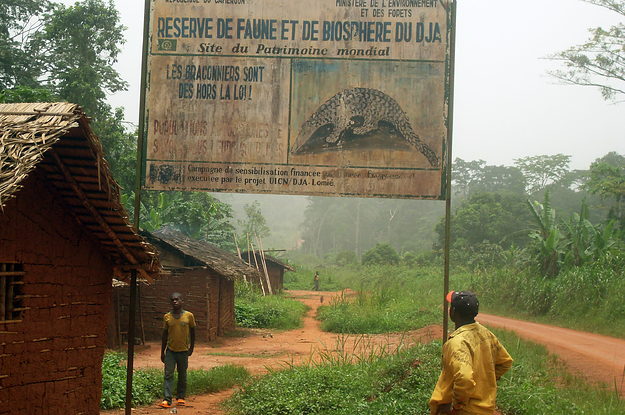 WWF Executives Were Warned Of Widespread Atrocities By Anti-Poaching Rangers The Charity Funded