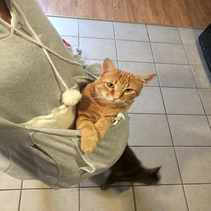 reviewer photo of cat in the hoodie pouch