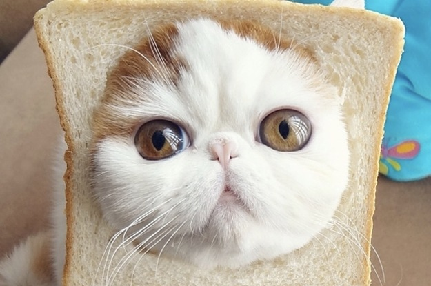 What Kind Of Bread Is Your Cat?