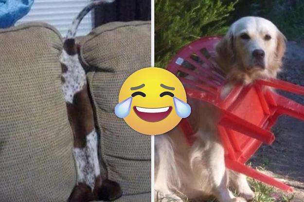 17 Hunde, die keine Ahnung haben, wie sie in diese Lage geraten sind