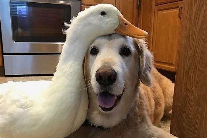 100 Wholesome Pictures That You Absolutely Need Today