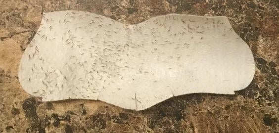 A reviewer's pore strip full of blackheads