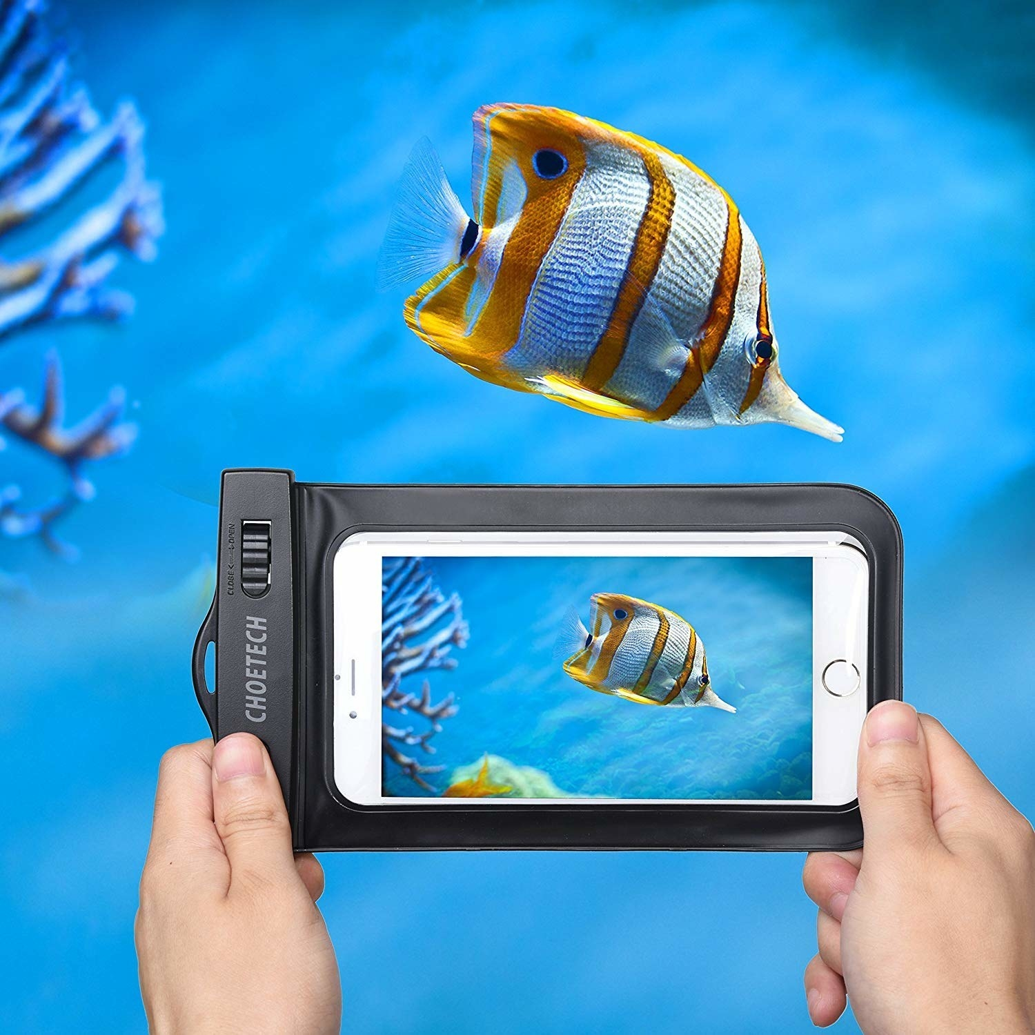 A person holding a waterproof plastic bag with their phone inside underwater to take a picture of a fish