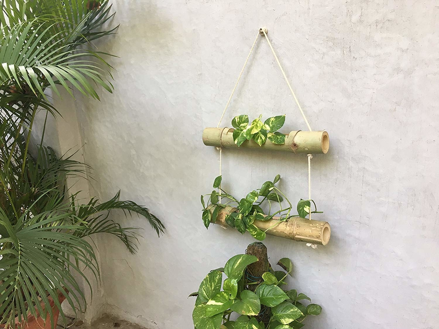 A bamboo planter hung on a wall next to plants.