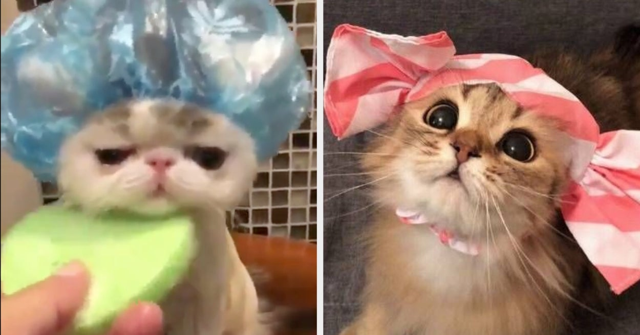 16 Cat Posts From This Week That Are Just What We Need Right Meow