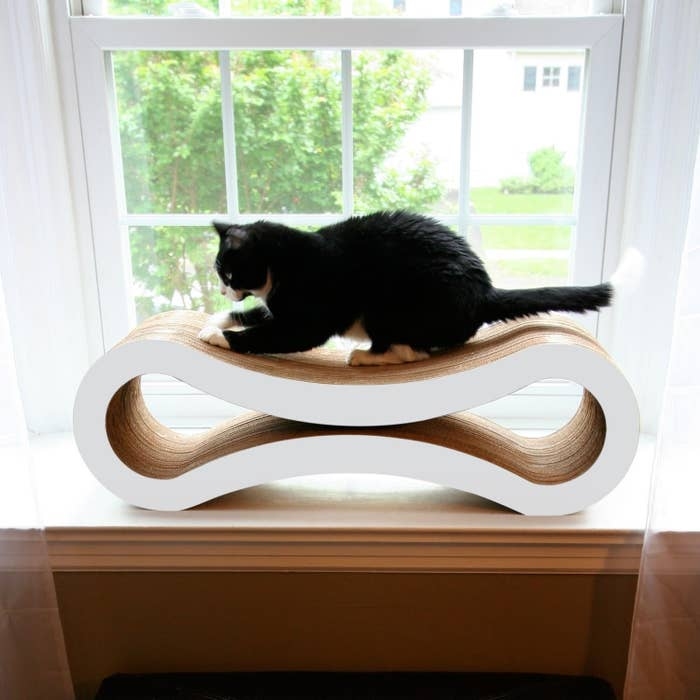 A cat standing on the curved scratcher. There is space inside for the cat to sit and play.
