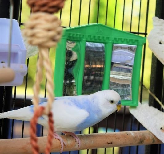 Small bird in cage standing beside tiny mirror