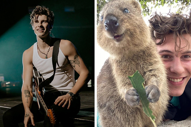 If You Look At One Thing Today, Make It This Photo Of Shawn Mendes Cuddling Up To A Quokka
