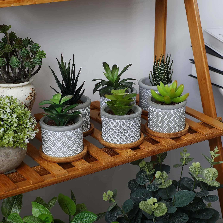 six succulents inside the cement succulent pots