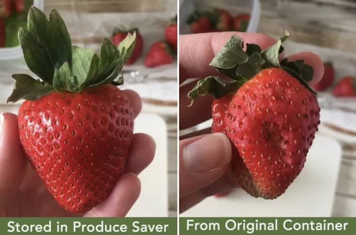 """BuzzFeed Editor Natalie Brown holding fresh strawberry labeled """"stored in produce saver"""" and on the left, a bruised strawberry labeled """"from original container"""""""
