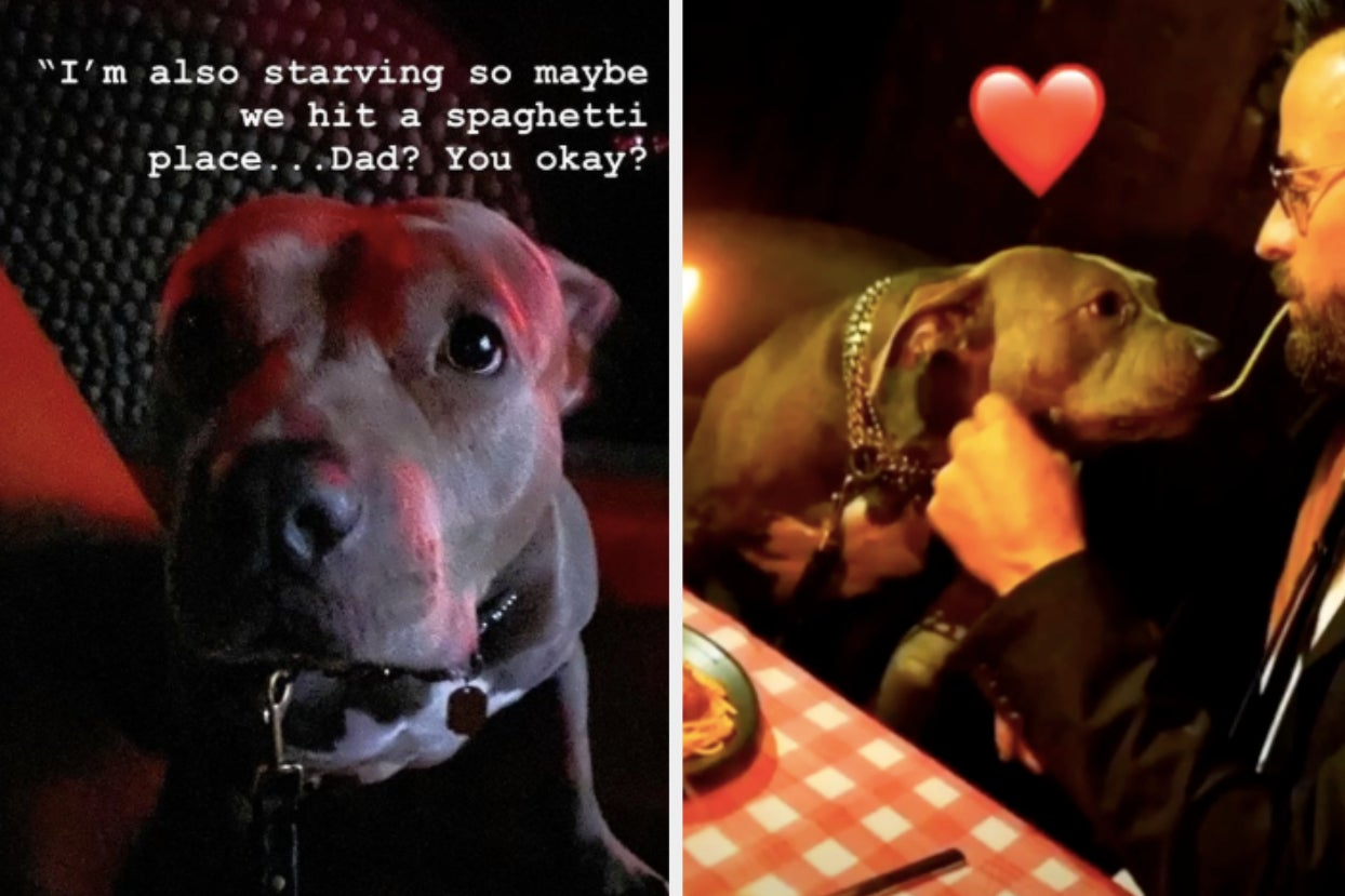 "Justin Theroux Took His Pit Bull As His Date To The ""Lady And The Tramp"" Premiere And Kissed Her..."