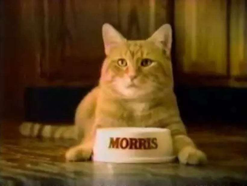Morris the cat in front of a bowl with his name on it