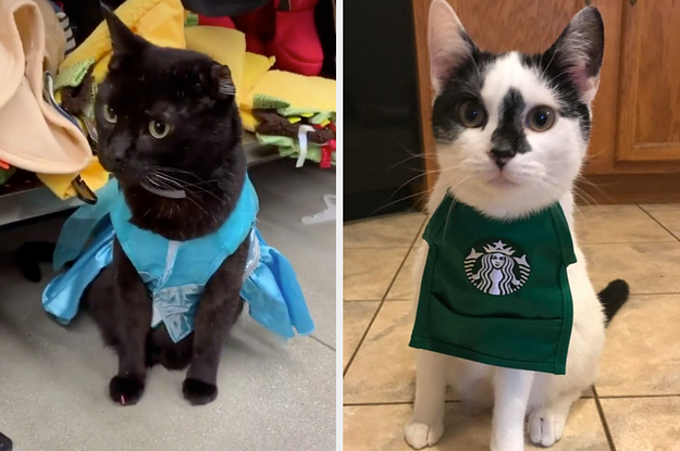 16 Cats Dressed In Halloween Costumes
