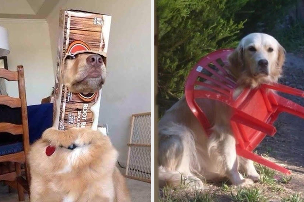 19 Dogs Who Have No Idea How They Got Here