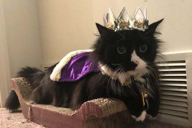 15 Cat Posts From This Week That Are Pawsitively Purrfect