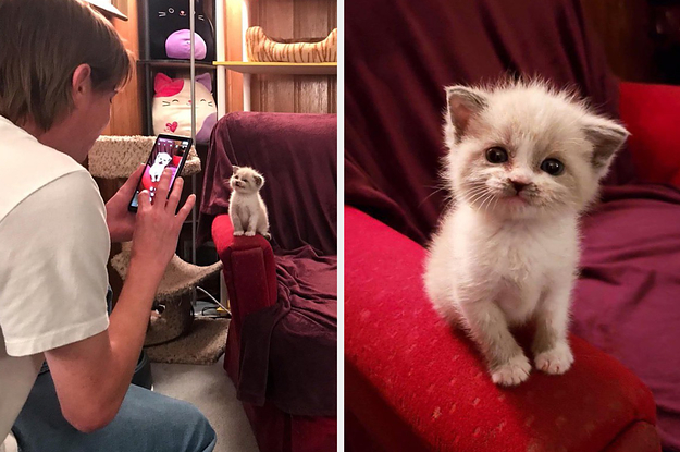 14 Cat Posts To Get You Through The Rest Of This Week
