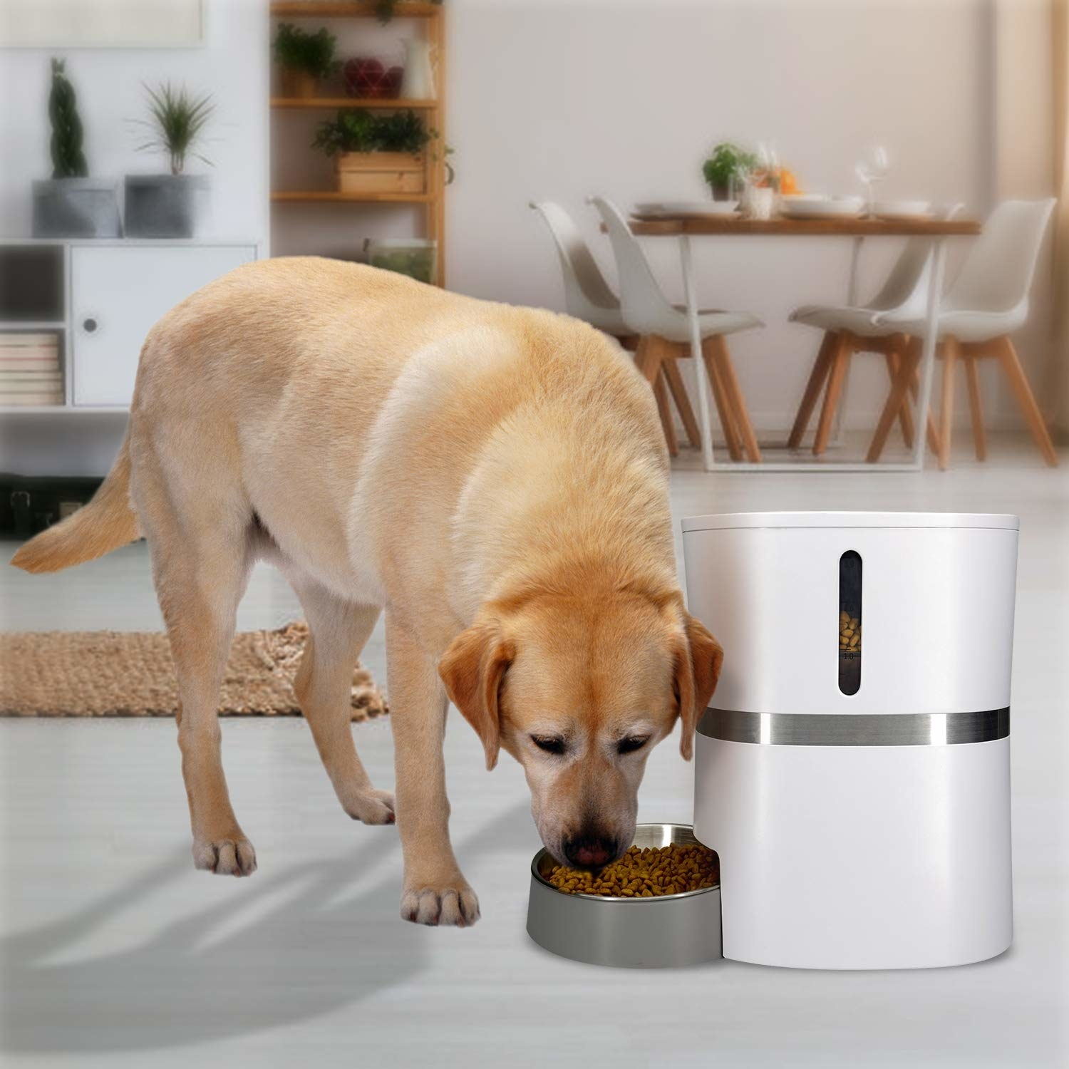A dog eating from the food dispenser