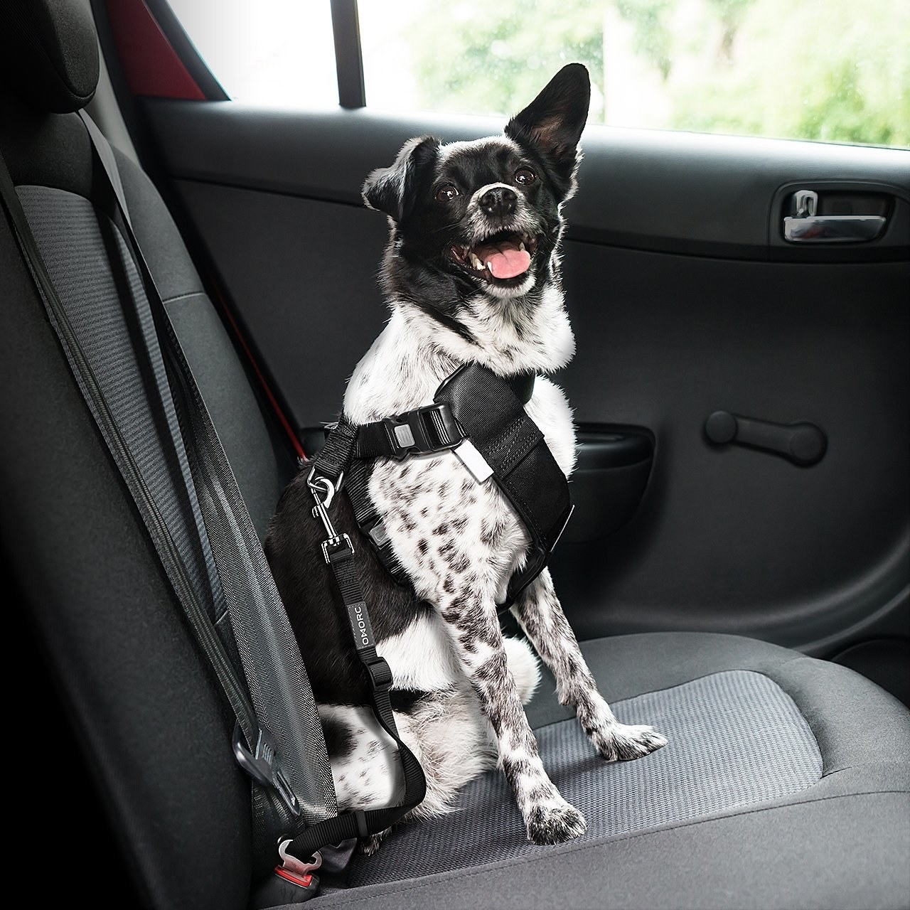 A dog strapped into the backseat of a car with the dog seat belt