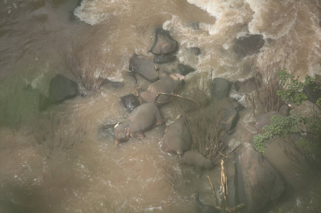 Six Elephants Died Trying To Save Each Other From A Waterfall In Thailand