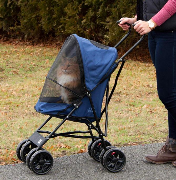 Cat inside covered stroller at park