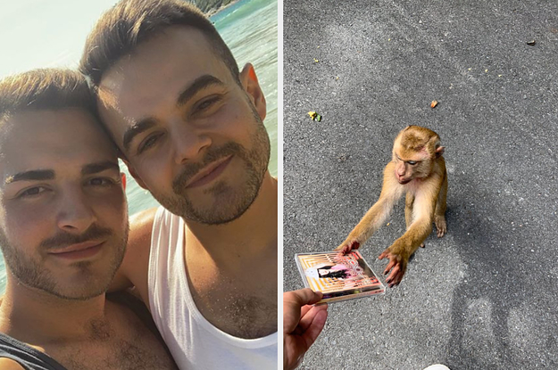 Two Gays Gave A Monkey A Copy Of Britney Spears' Best Album And Then The Monkey Instantly Became Gay