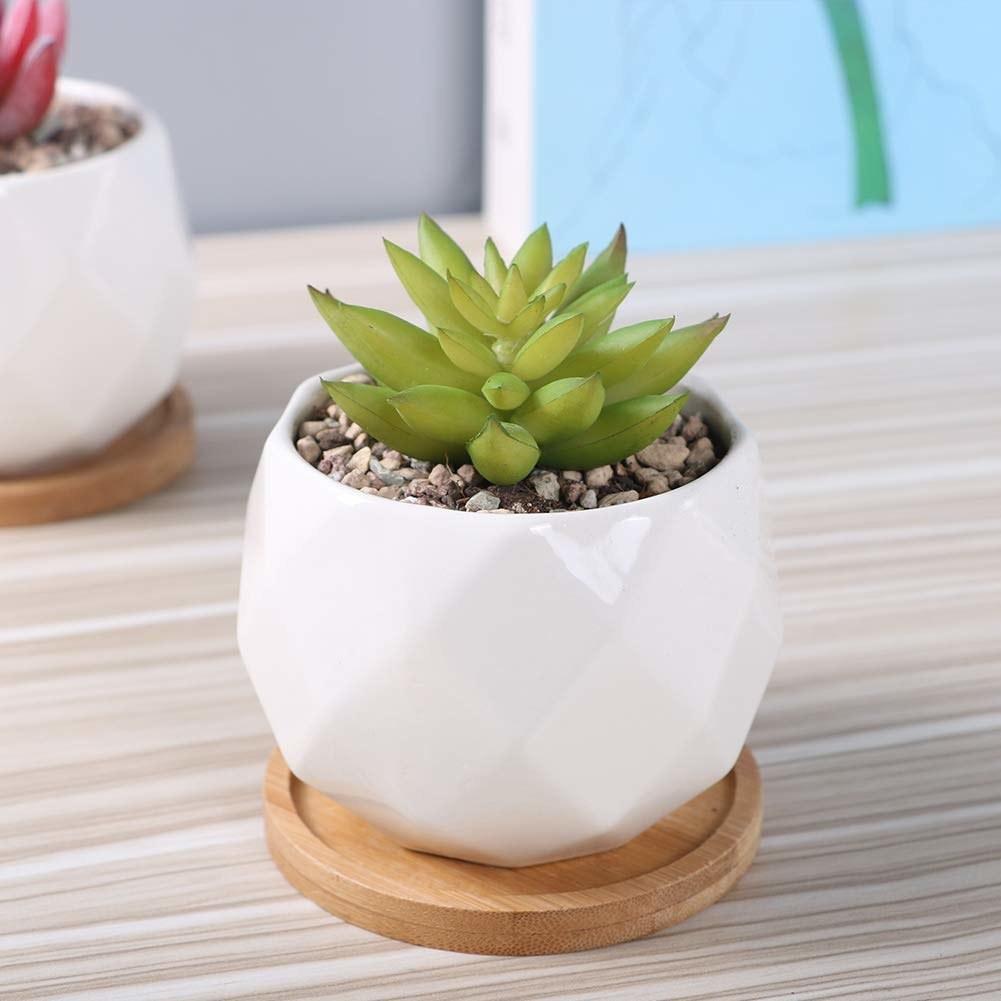 A ceramic plant pot with a succulent plant inside