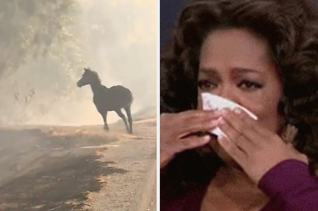 This Horse Saving Two Other Horses From The California Fires Is The Sweetest Thing I've Seen All Week
