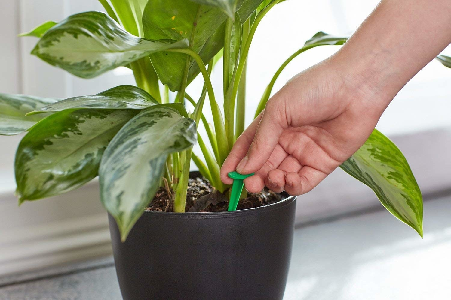 A hand placing the food spikes into a plant