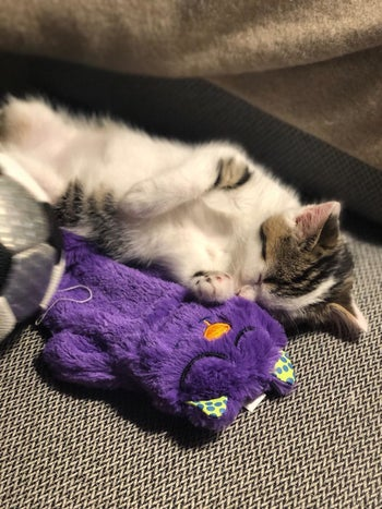 Reviewer photo of their kitty snuggling with the toy