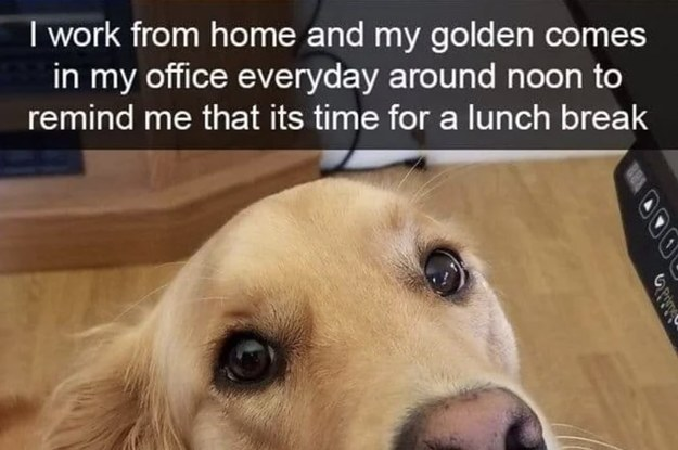 21 Times Golden Retrievers Were Truly Too Pure For Words
