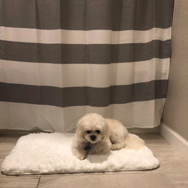 A customer review photo of their dog sitting on the bath mat