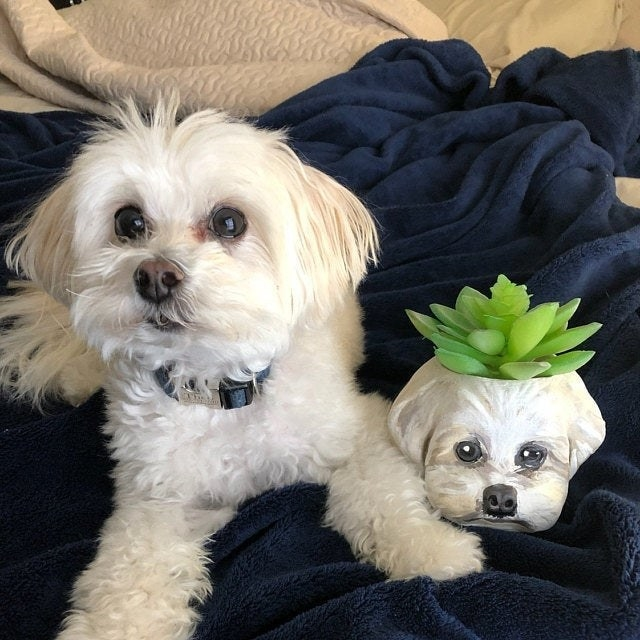 dog poses with pot shaped like its face