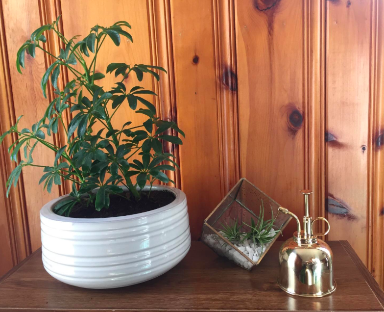 A customer review photo of the mister next to a plant