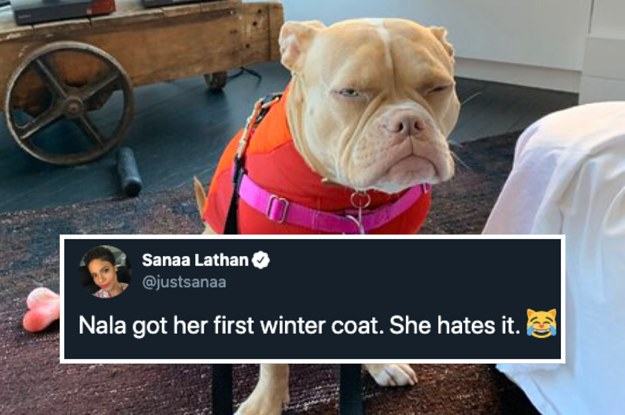 51 Great Tweets That Will Make Your Crappy Day 10 Times Better