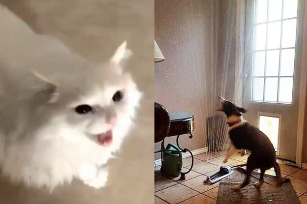 8 Cats That Make Me Want A Dog And 8 Dogs That Make Me Want A Cat