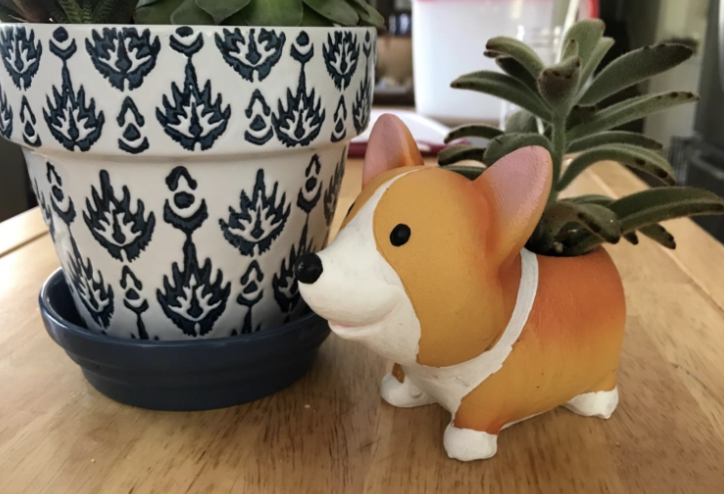 the light brown and white corgi planter next to a full-sized potted plant for size reference