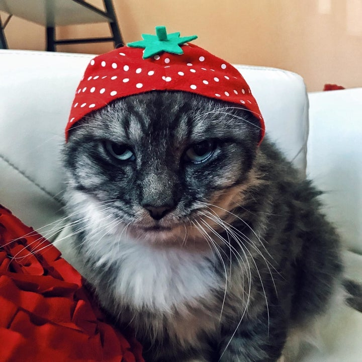 angry cat with strawberry hat