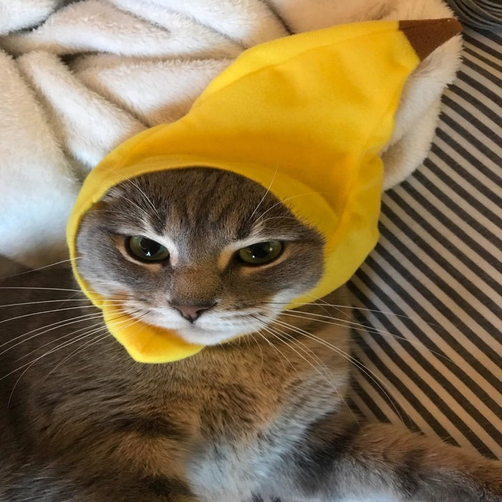 another angry cat with banana hat