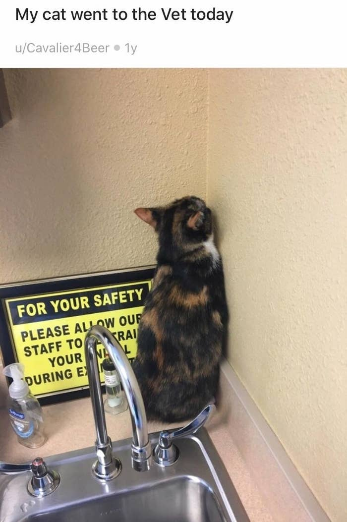 15 Cats Who Tried Their Very Best To Hide From The Vet