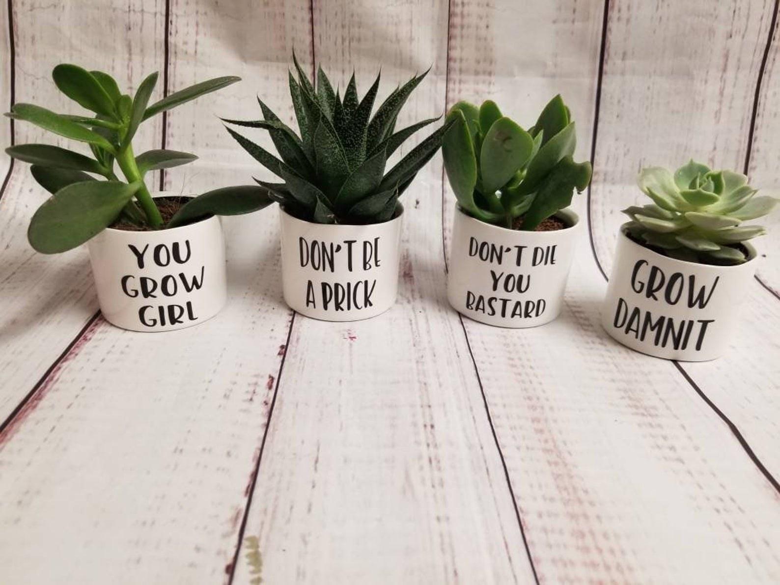 the plant pots