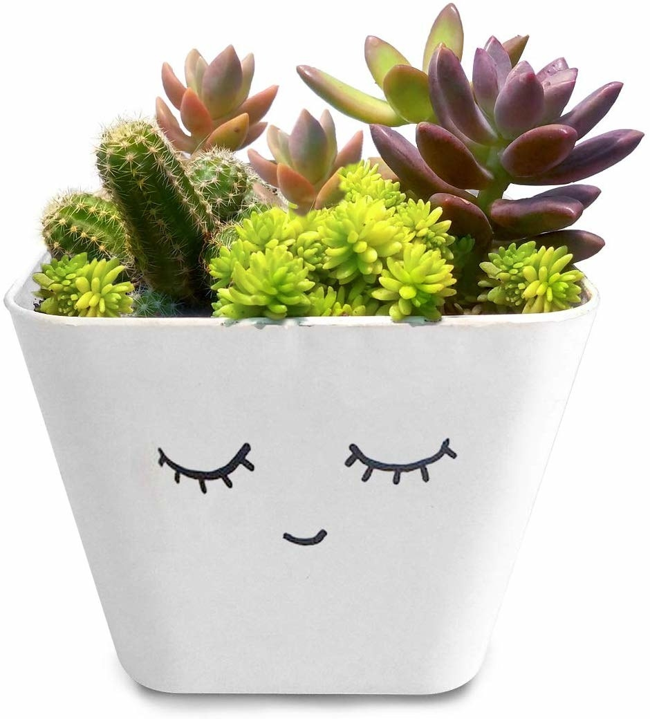 A white pot with a smiling face on it. It is housing various species of succulents.