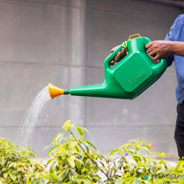 A person using a green watering can with a yellow spout to water plants.