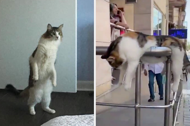 41 Cat Posts From 2019 That Are Pretty Darn Purrfect