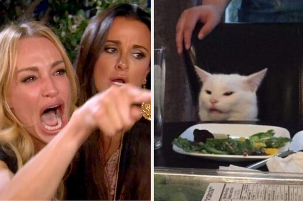 "27 ""Woman Yelling At A Cat"" Memes That Have Kept Me Laughing So Hard"