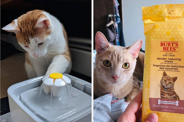 23 Problem-Solving Products For Cat Owners