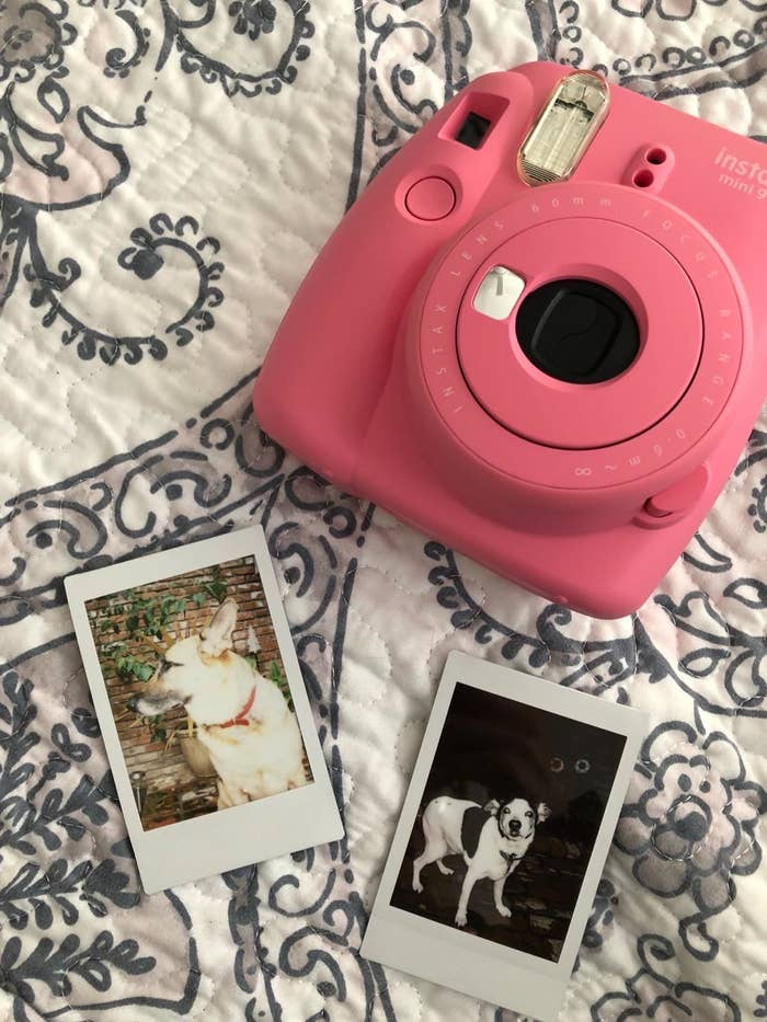 A reviewer showing the pink camera with two instant prints of their dogs