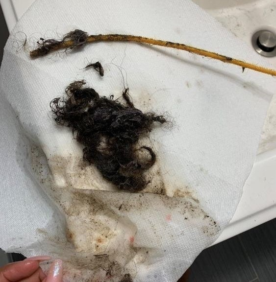 A clump of hair captured by the drain snake