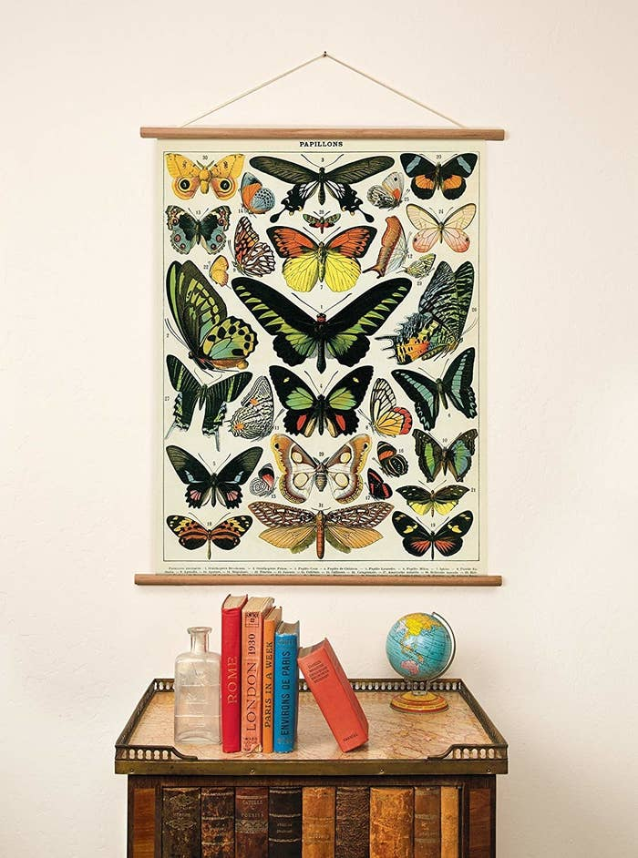 Poster with vintage butterfly illustrations